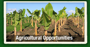 Agricultural Opportunities